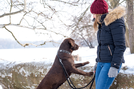A beautiful young blond-haired woman is having fun with her big brown labrador dog in the park in winter Stok Fotoğraf
