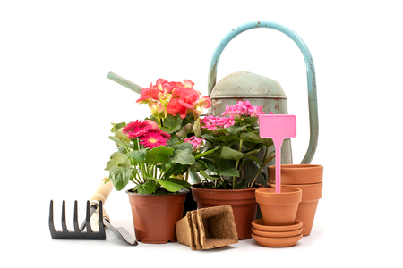 Gardening tools and spring flowers isolated on white