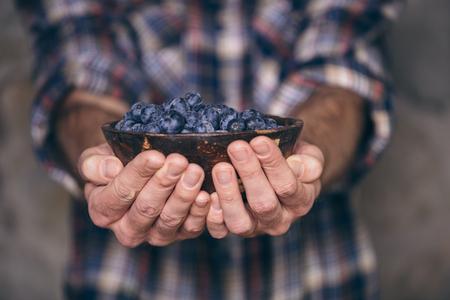 Gardeners hands with fresh blueberries Stok Fotoğraf