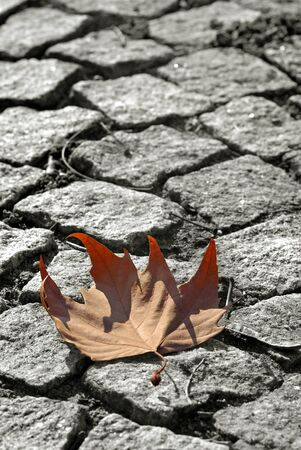 Leaf on the ground photo
