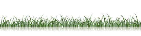 A vector grass illustration with a reflection on the ground Vector