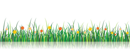 A vector grass illustration with flowers and a reflection Vector