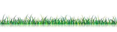 A vector grass illustration with a reflection on the background Illustration
