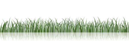A vector grass illustration with a reflection on the background Vector