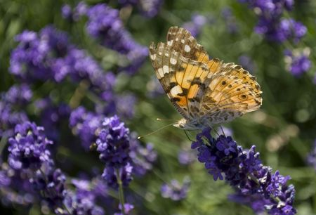 A butterfly sitting on a flower in the garden Stock Photo - 5332277