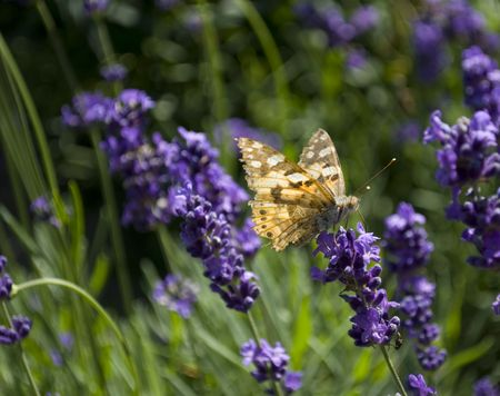 A butterfly sitting on a flower in the garden photo