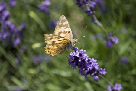 A butterfly sitting on a flower in the garden Stock Photo - 5332278