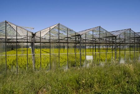 conservatories: Greenhouse with crops in the netherlands - Holland