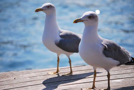 seagulls on the harbor of barcelona Imagens