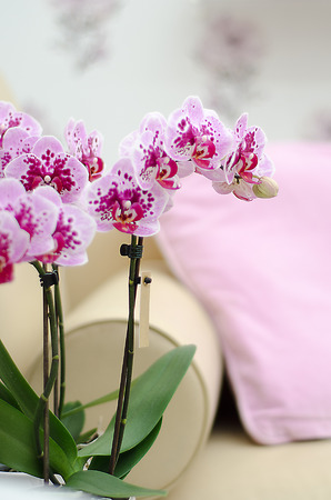 orchid house: Pink orchid in the interior with a yellow sofa on background Stock Photo