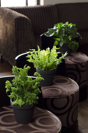 Green plants on brown chairs in a appartment Stock Photo