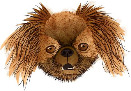 Front portrait of a brown dog in vector shapes on white background