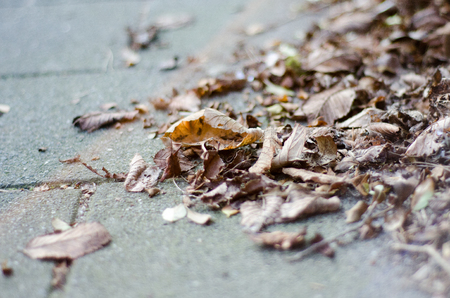Autumn leaves lying on the street Stock Photo