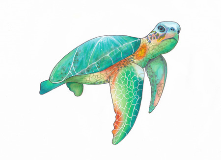 Illustration of a colorful sea turtle swimming made with markers