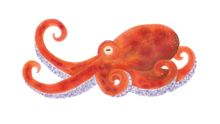 Handdrawn illustrations of a orange octopus crawling on the ground Stock Photo