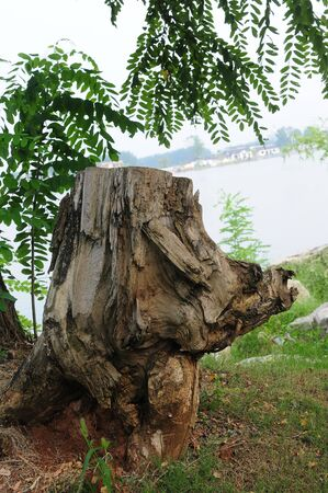 bark carving: Stump like a pig
