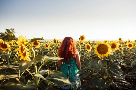 Red-haired young woman walking away in a field of sunflowers, view from her back. Copy space Stock Photo