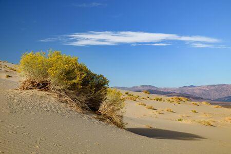 Eureka Dunes Dry Camp, suothwest USA wilderness Stock Photo