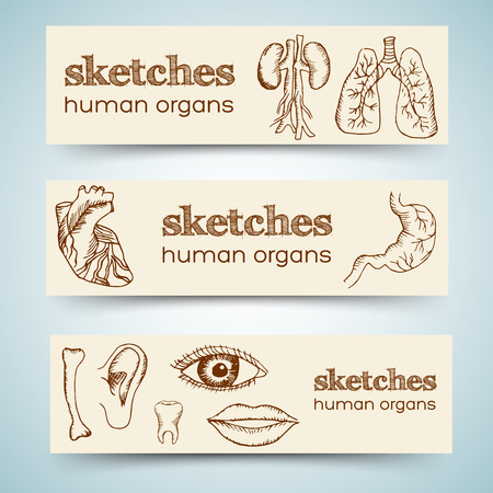 human organs in sketches style set. Vector illustration vertical banners Vector
