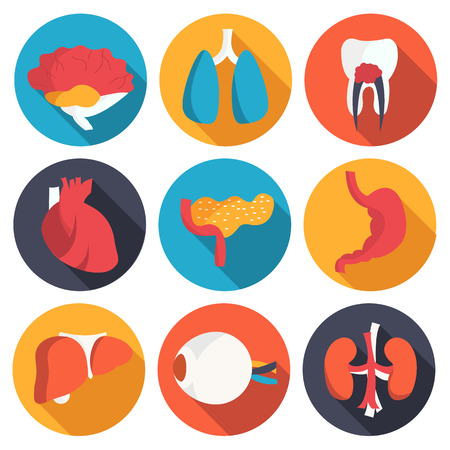 organs: set flat human organs icons illustration concept. Vector backgro