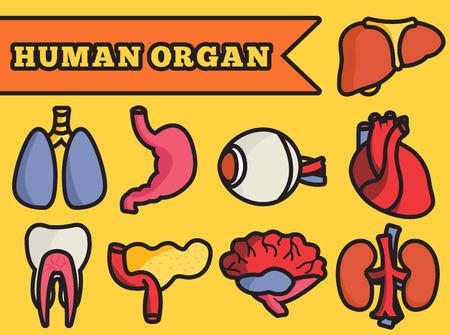 body heart: set flat human organs icons illustration concept. Vector backgro