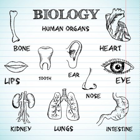 body outline: human organs in sketches style set. Vector illustration backgrou