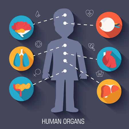 set flat human organs icons illustration infographic concept. Vector background design Vector