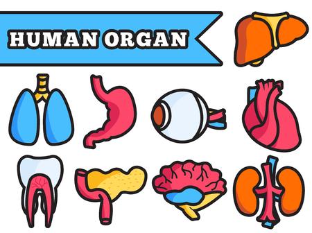 medical heart: Human organ thin line illustration concept set design Illustration