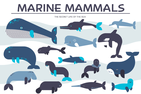 Sea mammals animal icon set. Illustration