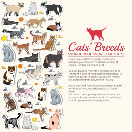 Vector breed cats icons sticker set. Cute animal illustrations pet design. Collection different kitten layout flat sticker cover Ilustrace
