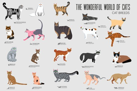 Vector breed cats icons set. Cute animal illustrations pet design . Collection different kitten layout flat cover. Reklamní fotografie