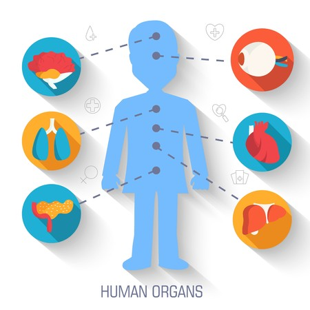 set flat human organs icons illustration infographic concept. Vector background design. Template for website and mobile appliance. Illustration