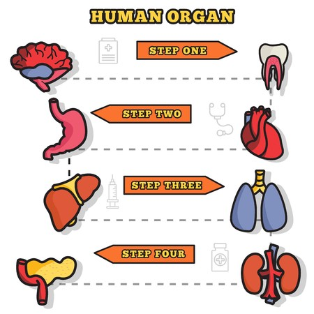 Thin lines style human organs set icons concept. Vector illustration design infographic