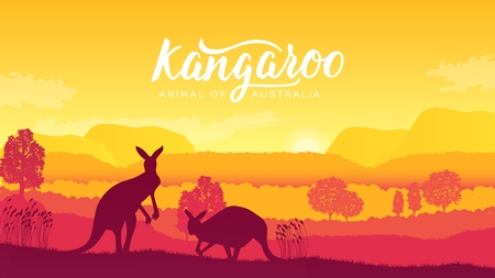 Australia kangaroo on landscape nature background. Wild animals in their natural habitat. Sunrise vector
