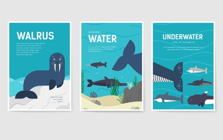Set of Sea mammals pattern concept. Art animal, magazine, book, poster, abstract, banners, element. Vector fish in ocean life package greeting card or invitation brochure design Stock Illustratie