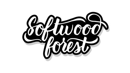 Softwood forest calligraphy template text for your design illustration concept. Handwritten lettering title vector words on white isolated  イラスト・ベクター素材