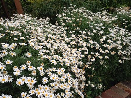 wish: White flowers Stock Photo