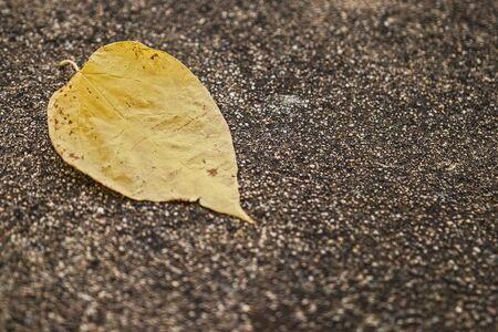 Yellow leaf Фото со стока