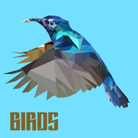 image birds