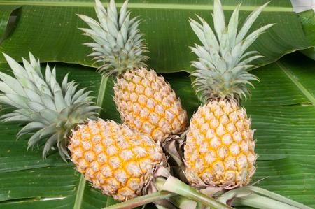 three pineapple on banana leaf