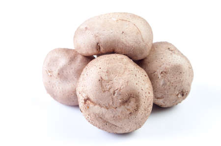 group of porcini mushrooms on white Stock Photo
