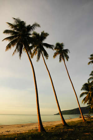 Coconut palms on sand beach in the morning photo