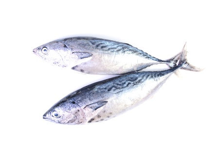 Tuna on white background