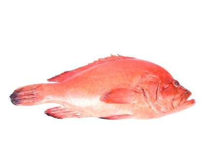 Red fish on a white background photo