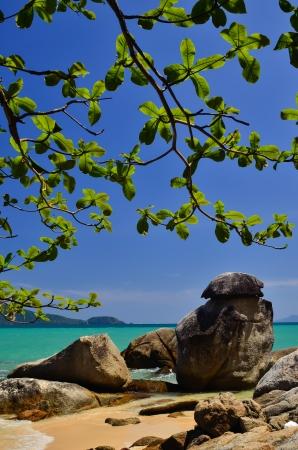 Trees rocks sea and a beautiful blue sky
