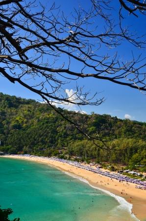 pristine corals: Trees sea and a beautiful blue sky