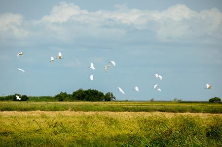 Birds on the fields