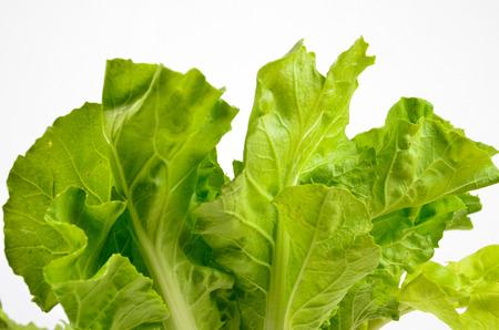 lettuce isolated on white background photo