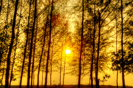 Beautiful scene in forest with sun photo