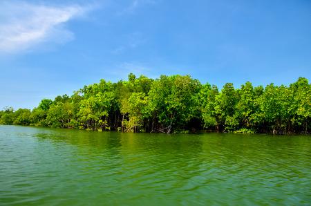 mangroves: Equatorial mangroves in the lake